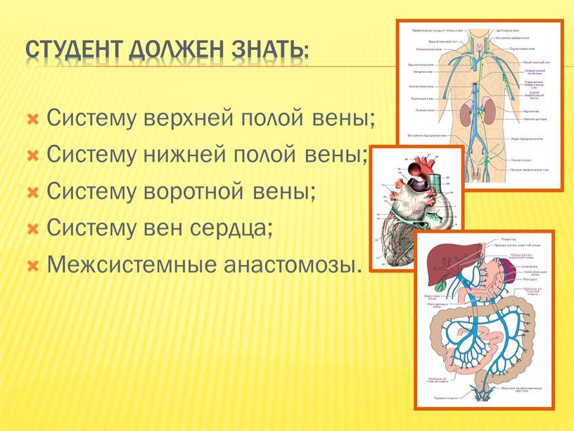 Студент должен знать: Систему верхней полой вены;