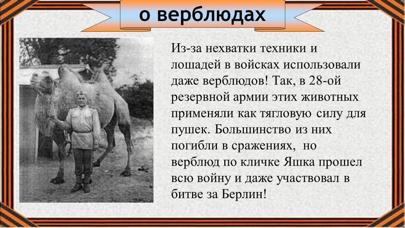 Из-за нехватки техники и лошадей в войсках использовали даже верблюдов!