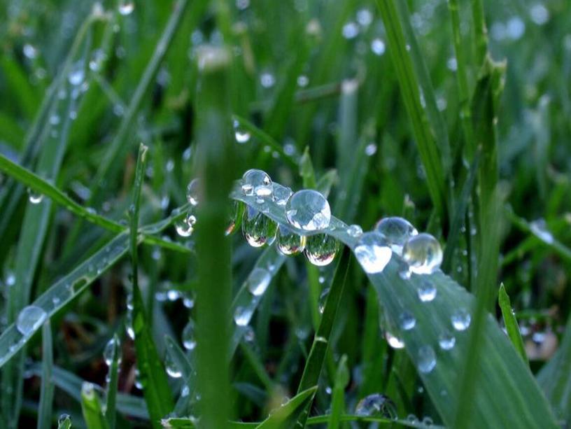 РОСА Утром бусы засверкали, Всю траву собой застлали,