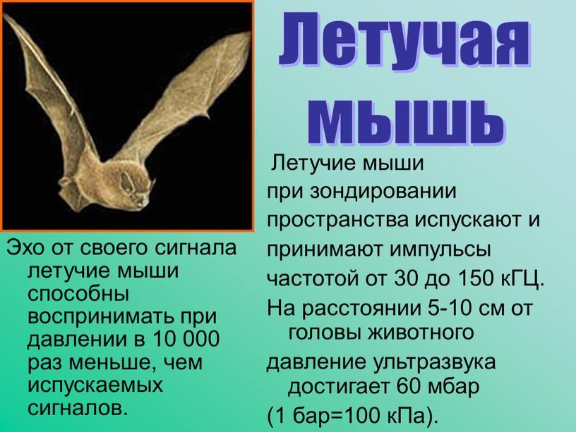 Эхо от своего сигнала летучие мыши способны воспринимать при давлении в 10 000 раз меньше, чем испускаемых сигналов