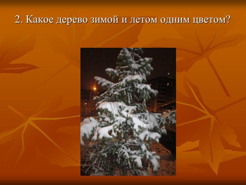 Какое дерево зимой и летом одним цветом?