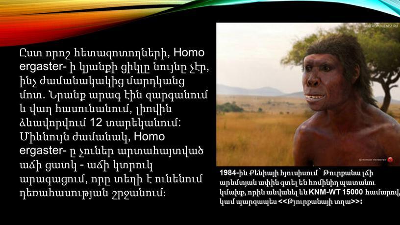 Homo ergaster- ի կյանքի ցիկլը նույնը չէր, ինչ ժամանակակից մարդկանց մոտ