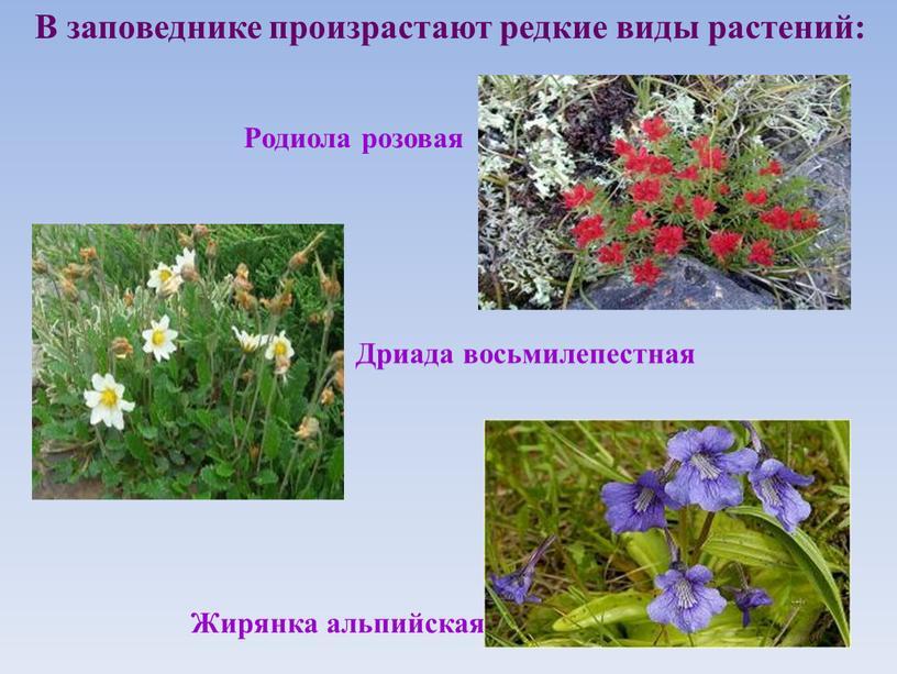 В заповеднике произрастают редкие виды растений: