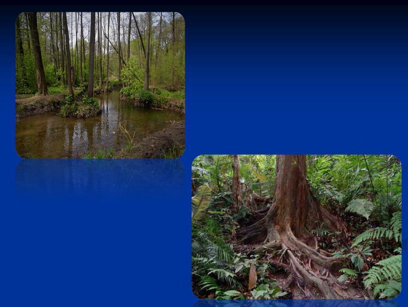 """Презентация к научно-исследовательской работе на тему """"Вода-священная тайна природы"""" (4 класс)"""