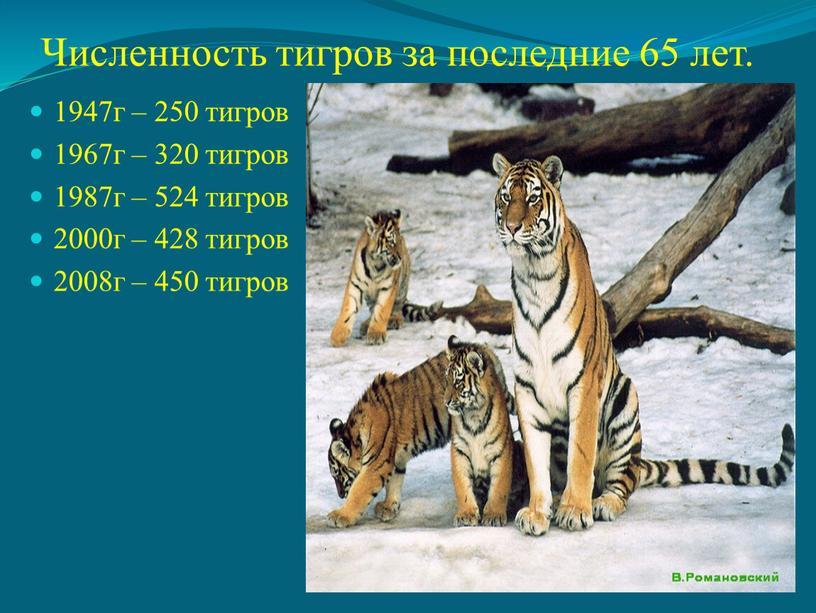 Численность тигров за последние 65 лет