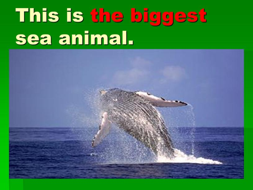 This is the biggest sea animal