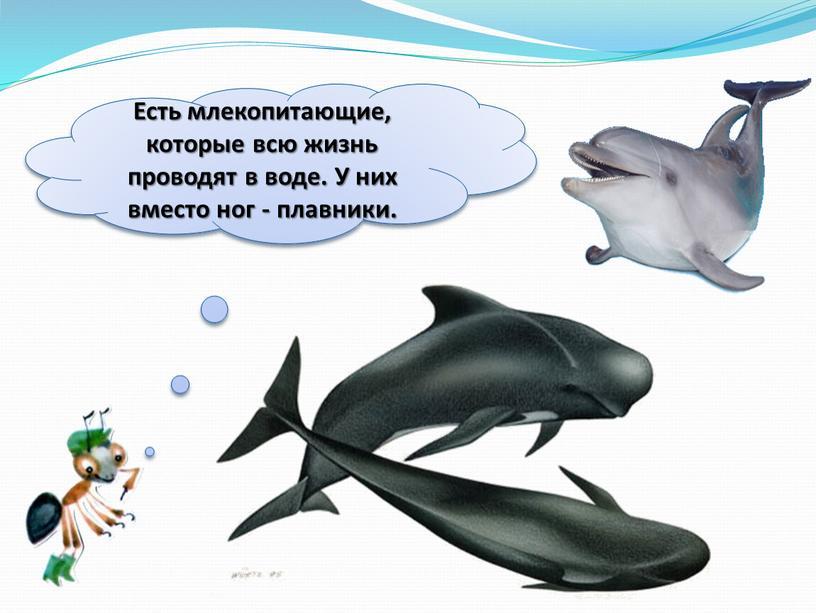 Есть млекопитающие, которые всю жизнь проводят в воде