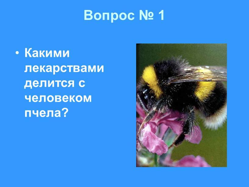 Вопрос № 1 Какими лекарствами делится с человеком пчела?