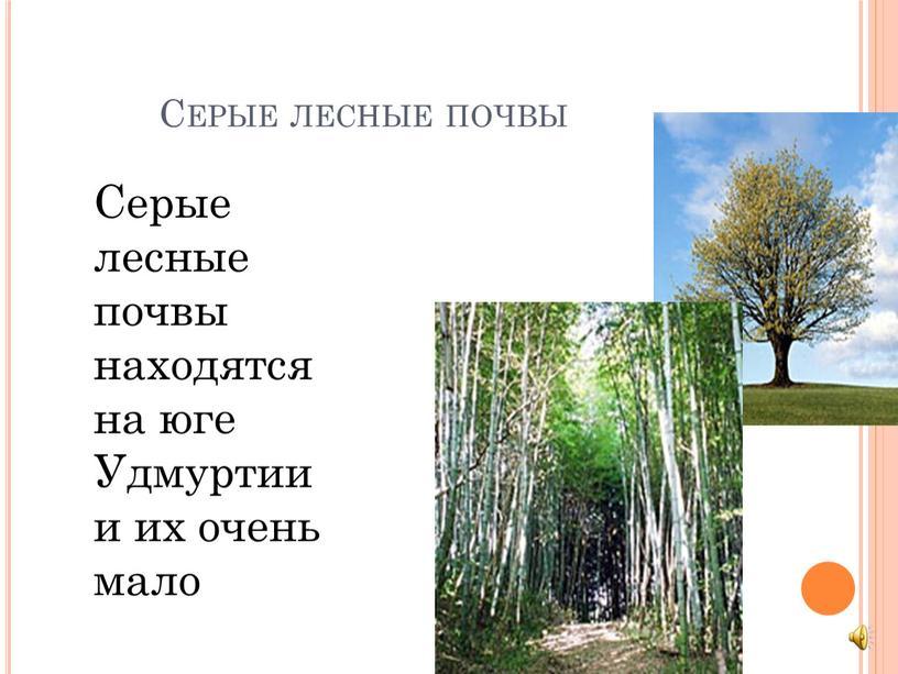 Серые лесные почвы Серые лесные почвы находятся на юге