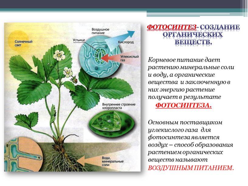 фотосинтез как тип питания борт поп-титан промахнулся