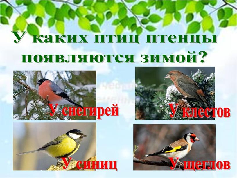 У каких птиц птенцы появляются зимой?