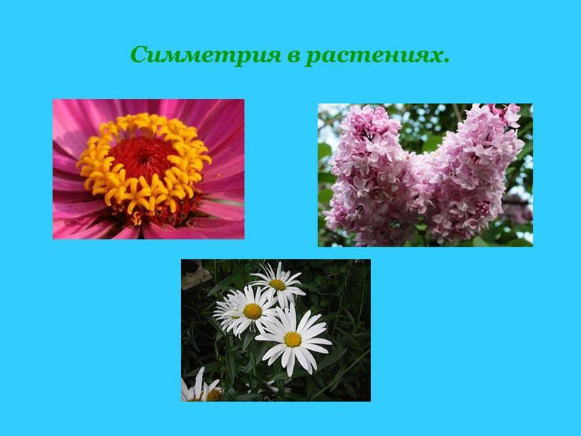 Симметрия в растениях.