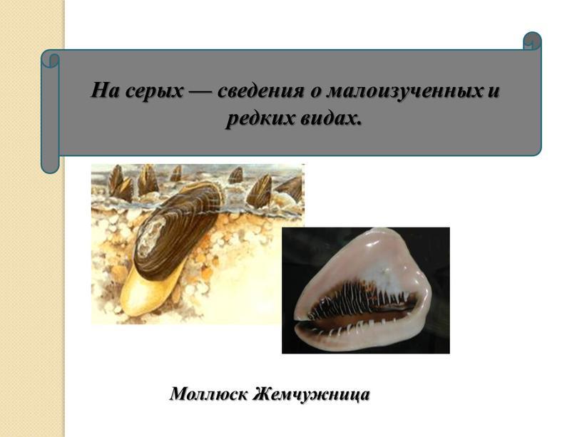 На серых — сведения о малоизученных и редких видах