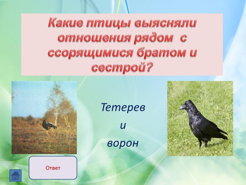 Тетерев и ворон Какие птицы выясняли отношения рядом с ссорящимися братом и сестрой?
