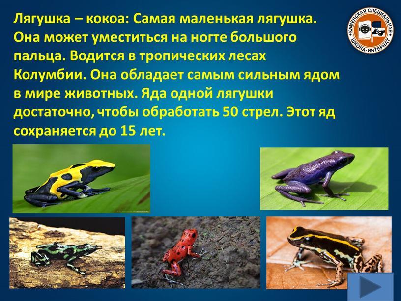 Лягушка – кокоа: Самая маленькая лягушка