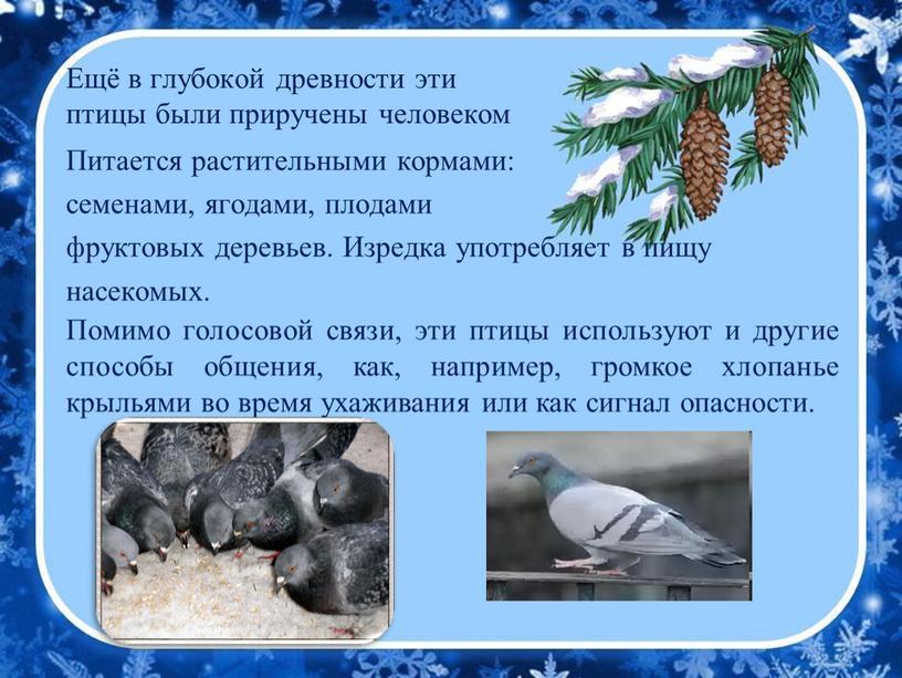 Ещё в глубокой древности эти птицы были приручены человеком
