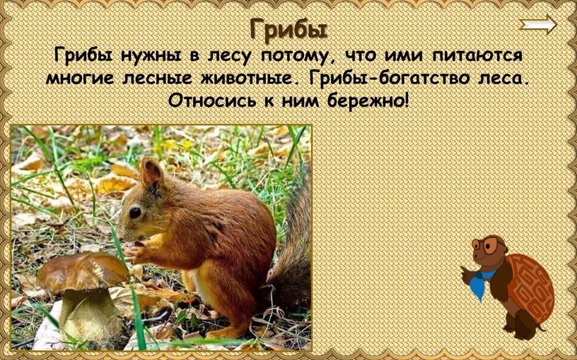 Грибы нужны в лесу потому, что ими питаются многие лесные животные