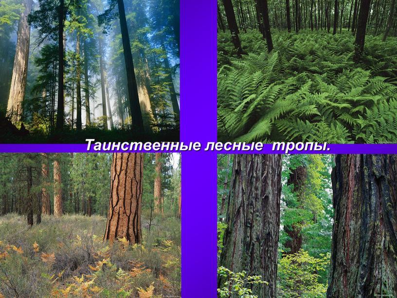 Таинственные лесные тропы.