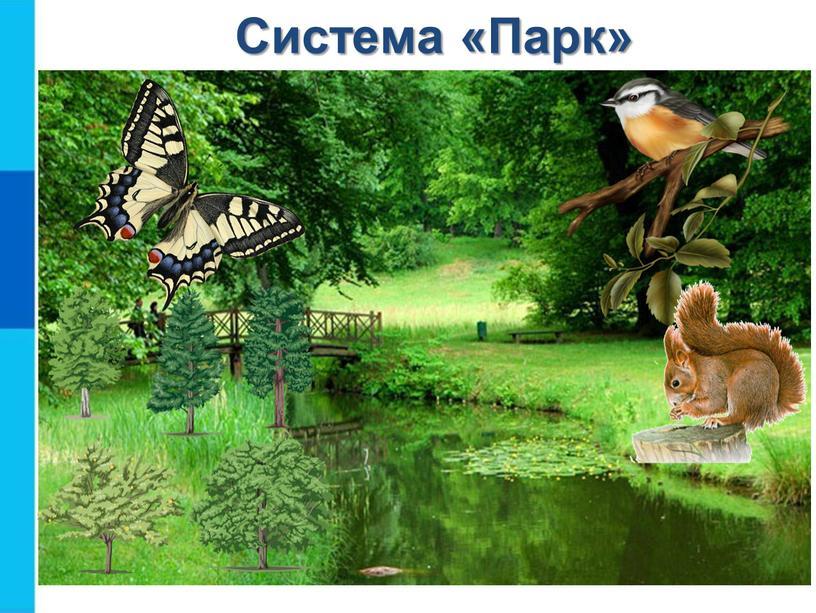 Система «Парк» Птицы Деревья