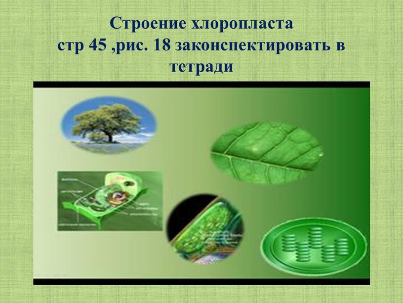 Строение хлоропласта стр 45 ,рис