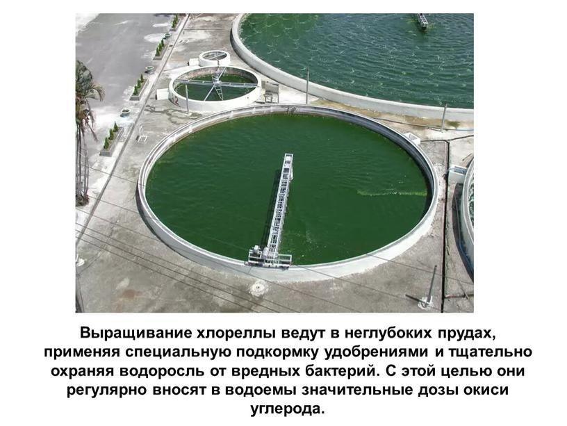 Выращивание хлореллы ведут в неглубоких прудах, применяя специальную подкормку удобрениями и тщательно охраняя водоросль от вредных бактерий