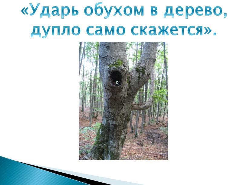 Ударь обухом в дерево, дупло само скажется»