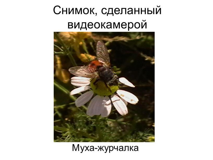 Снимок, сделанный видеокамерой