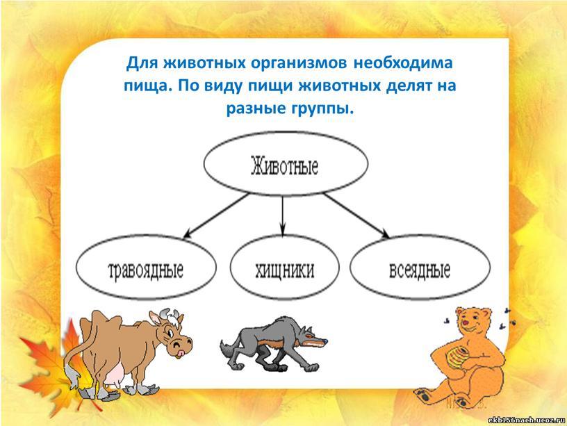 Для животных организмов необходима пища