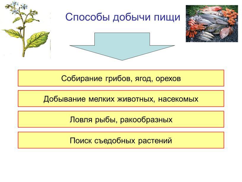Способы добычи пищи Собирание грибов, ягод, орехов