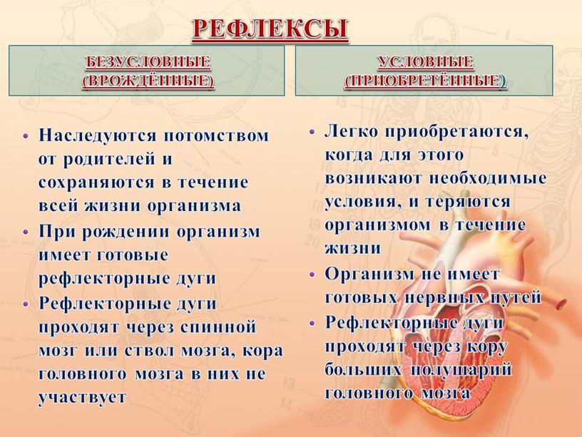 РЕФЛЕКСЫ БЕЗУСЛОВНЫЕ (ВРОЖДЁННЫЕ)