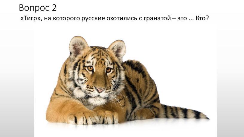 Вопрос 2 «Тигр», на которого русские охотились с гранатой – это