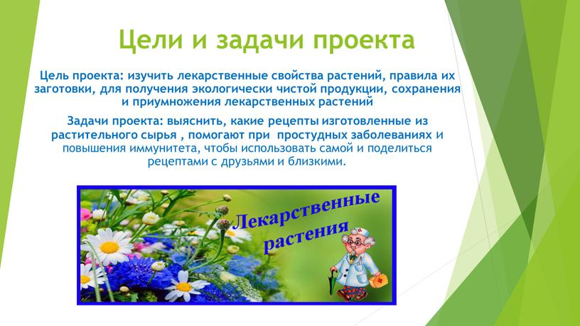Цели и задачи проекта Цель проекта: изучить лекарственные свойства растений, правила их заготовки, для получения экологически чистой продукции, сохранения и приумножения лекарственных растений