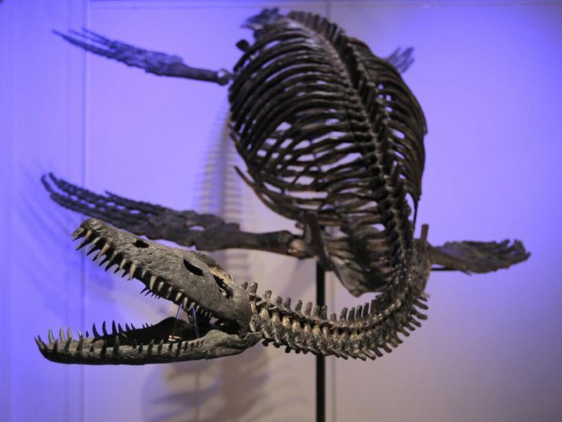 Оренбуржье десятки миллионов лет назад