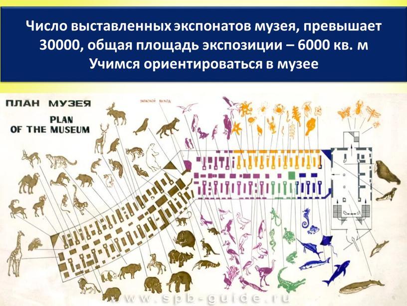 Число выставленных экспонатов музея, превышает 30000, общая площадь экспозиции – 6000 кв