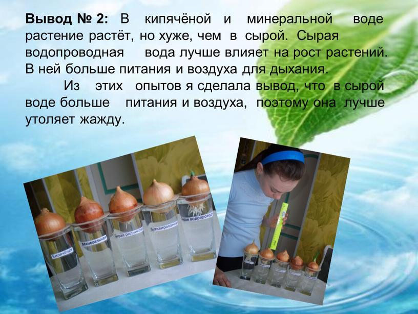 Вывод № 2: В кипячёной и минеральной воде растение растёт, но хуже, чем в сырой