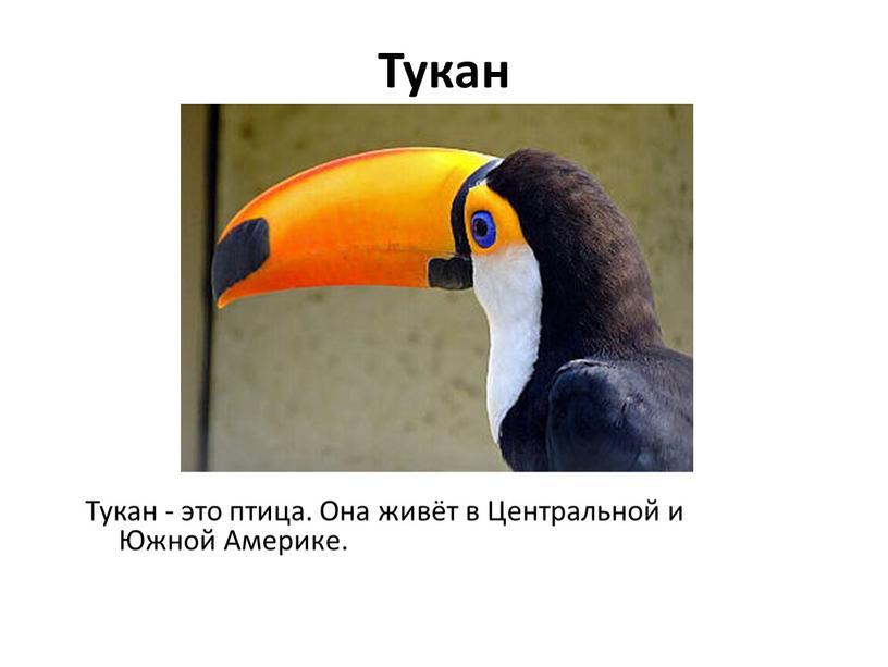 Тукан Тукан - это птица. Она живёт в
