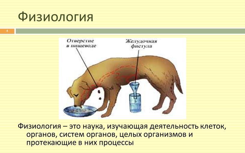 Физиология Физиология – это наука, изучающая деятельность клеток, органов, систем органов, целых организмов и протекающие в них процессы 4