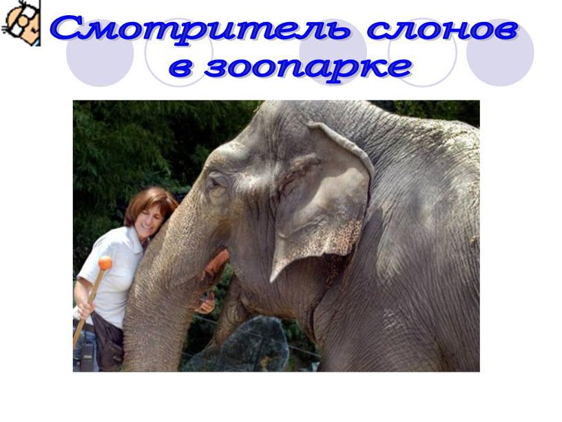 Смотритель слонов в зоопарке