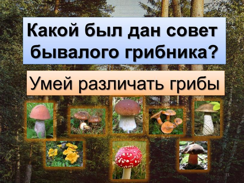 Какой был дан совет бывалого грибника?