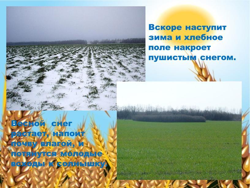 Вскоре наступит зима и хлебное поле накроет пушистым снегом