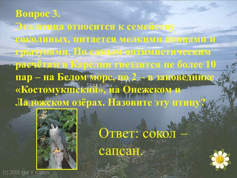 Вопрос 3. Эта птица относится к семейству соколиных, питается мелкими птицами и грызунами