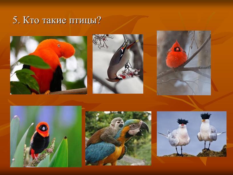 5. Кто такие птицы?