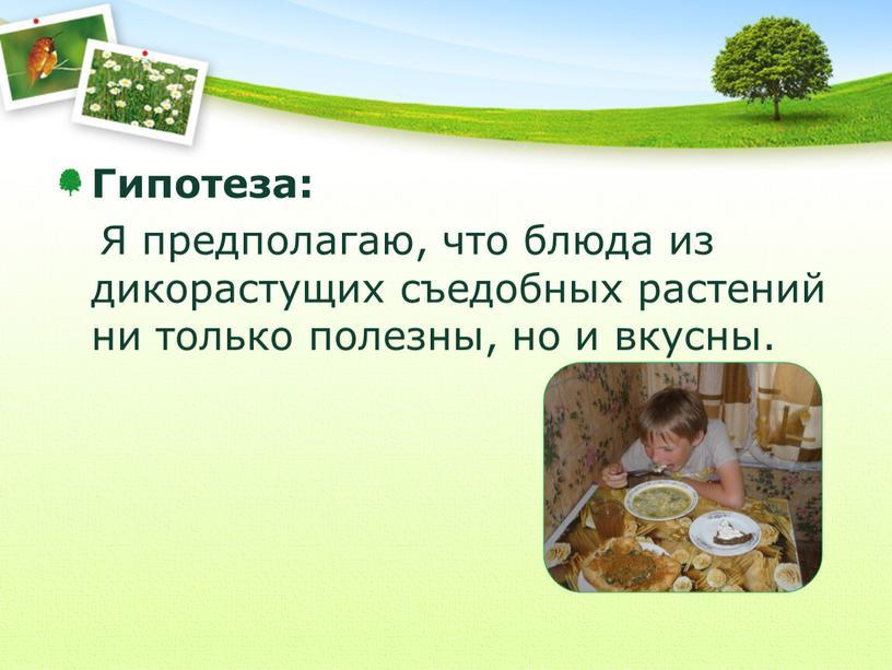 Гипотеза: Я предполагаю, что блюда из дикорастущих съедобных растений ни только полезны, но и вкусны