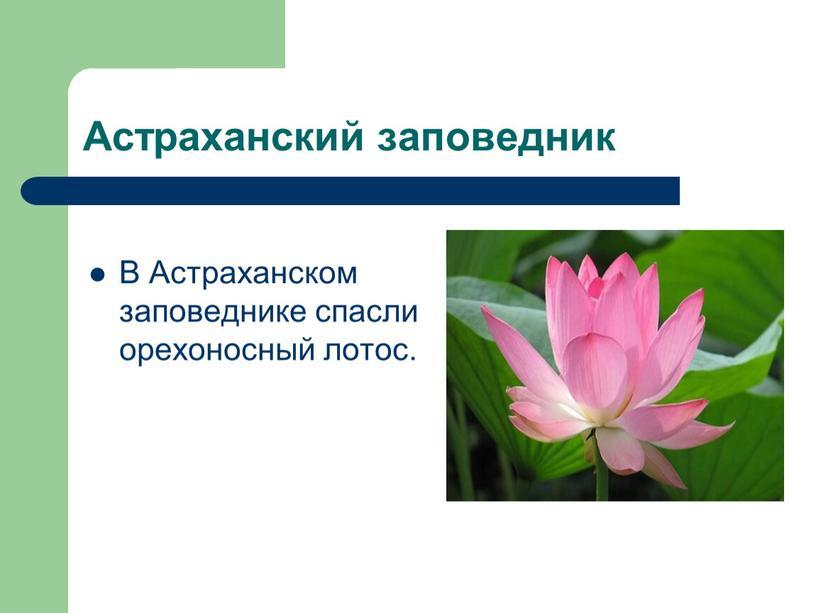 Астраханский заповедник В Астраханском заповеднике спасли орехоносный лотос