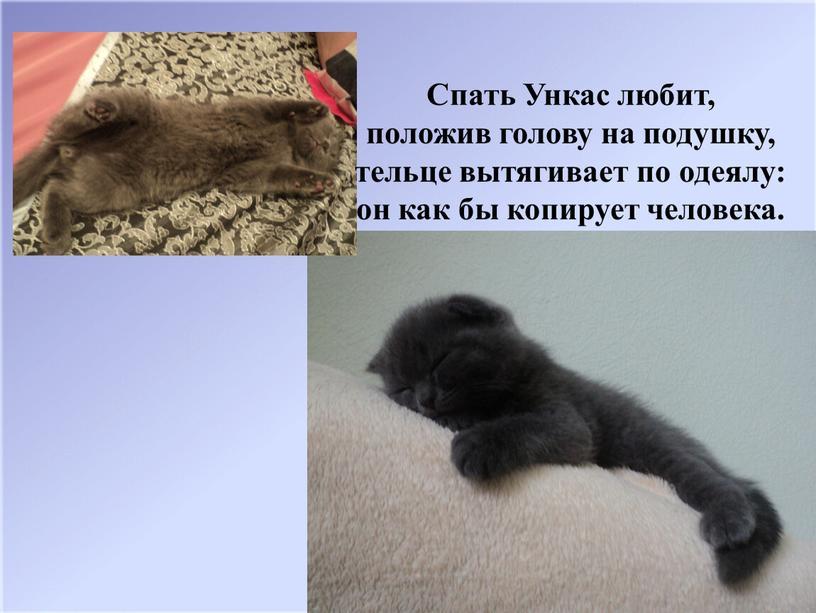 Спать Ункас любит, положив голову на подушку, тельце вытягивает по одеялу: он как бы копирует человека