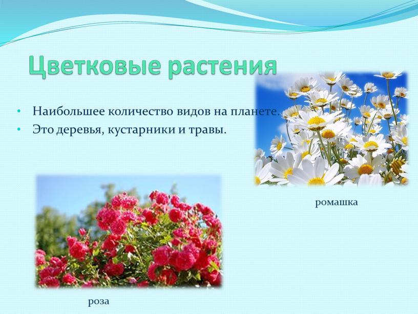 Цветковые растения Наибольшее количество видов на планете