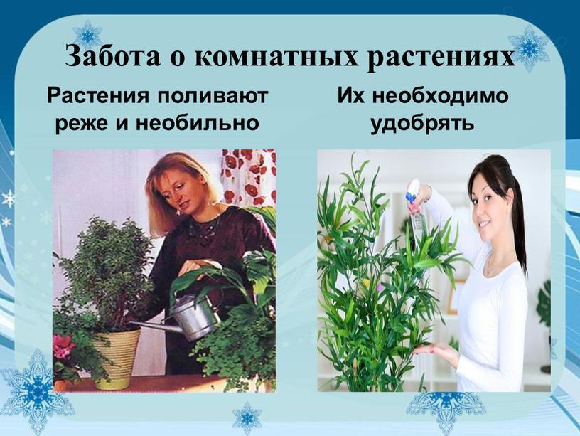 Забота о комнатных растениях Растения поливают реже и необильно