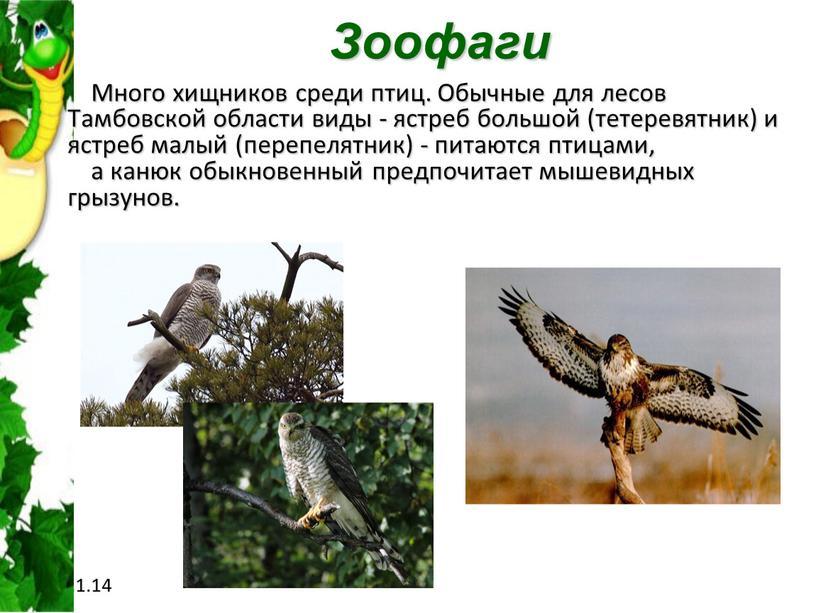 Зоофаги Много хищников среди птиц