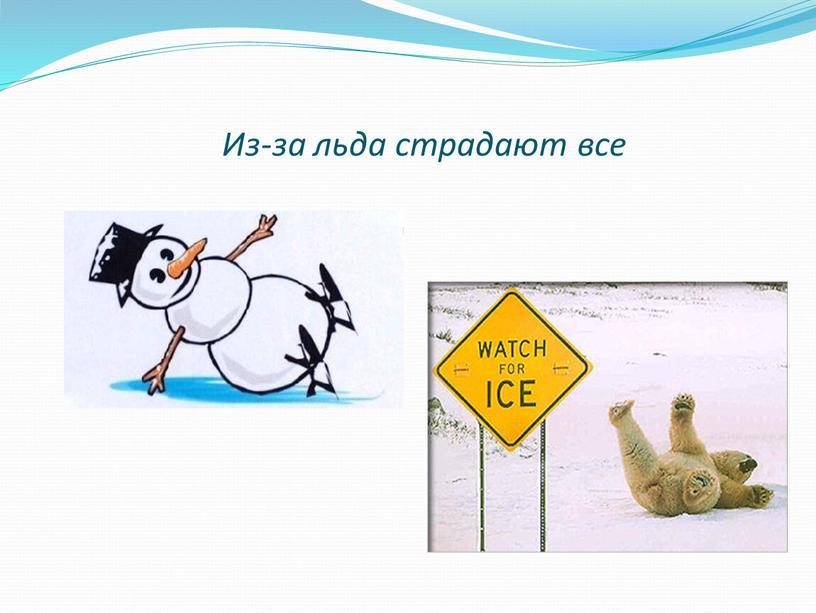 Из-за льда страдают все