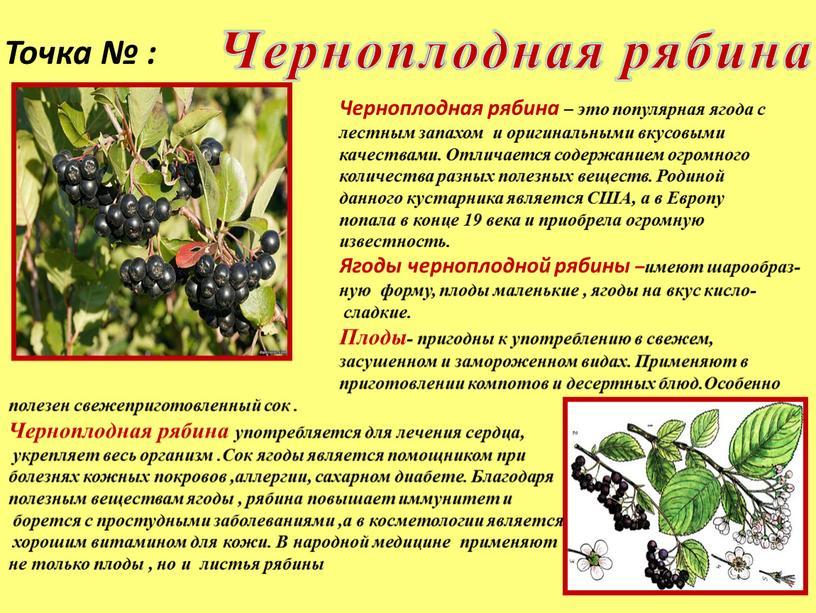 Точка № : Черноплодная рябина – это популярная ягода с лестным запахом и оригинальными вкусовыми качествами